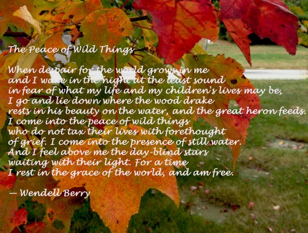 Peace Wendell Berry